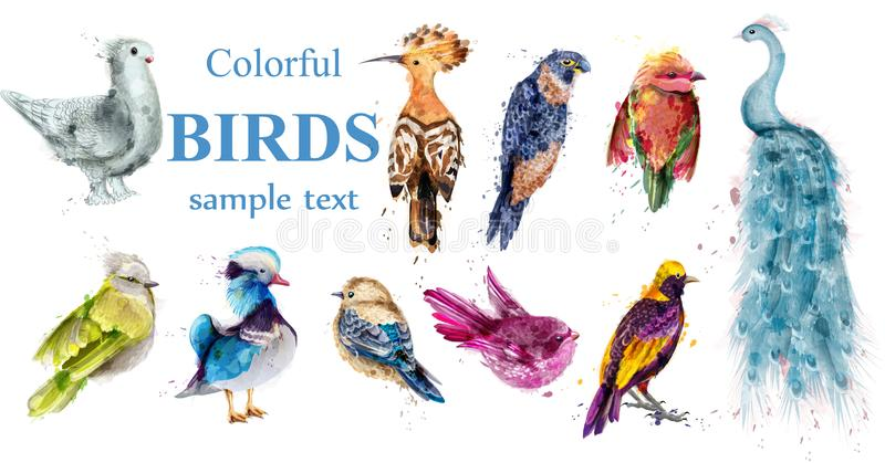 Colorful tropic birds set Vector watercolor. Beautiful peacock, dove, hoopoe, mandarin ducks. Colorful tropic birds set Vector watercolor. Beautiful peacock stock illustration