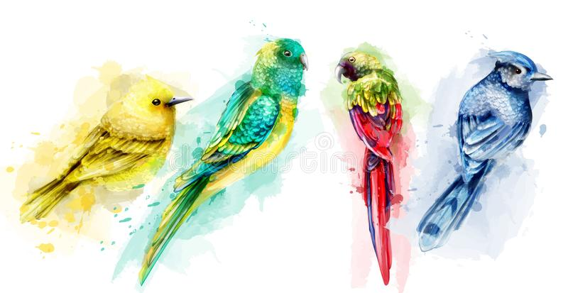 Colorful tropic birds watercolor Vector. Beautiful exotic set collections royalty free illustration