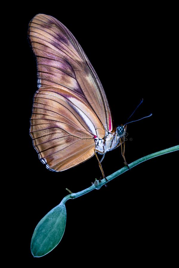 Colorful tropical butterfly closeup on green tree branch with dark background. Malaysia royalty free stock photo