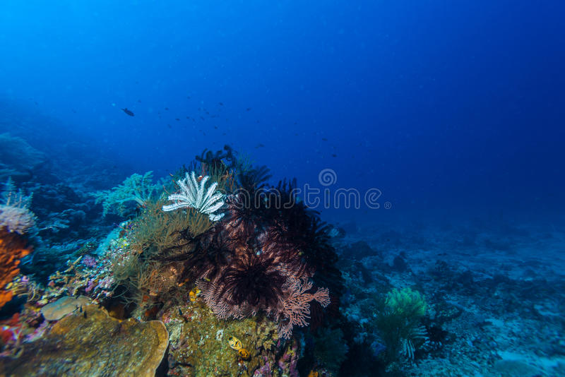 Colorful Tropical Coral Reef with Sea Lilies royalty free stock photos