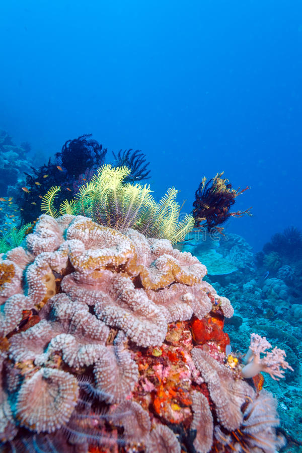 Colorful Tropical Coral Reef with Sea Lilies stock photo