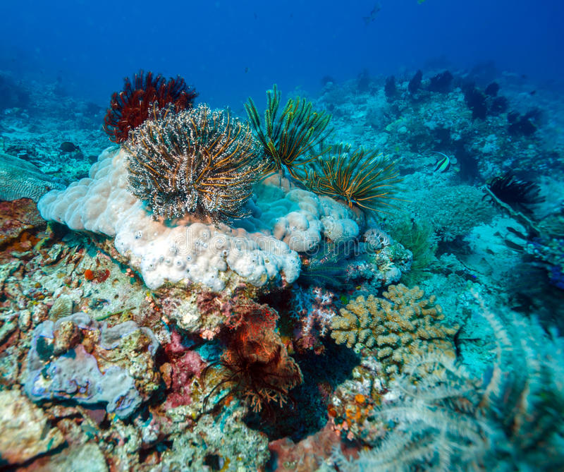 Colorful Tropical Coral Reef with Sea Lilies stock image
