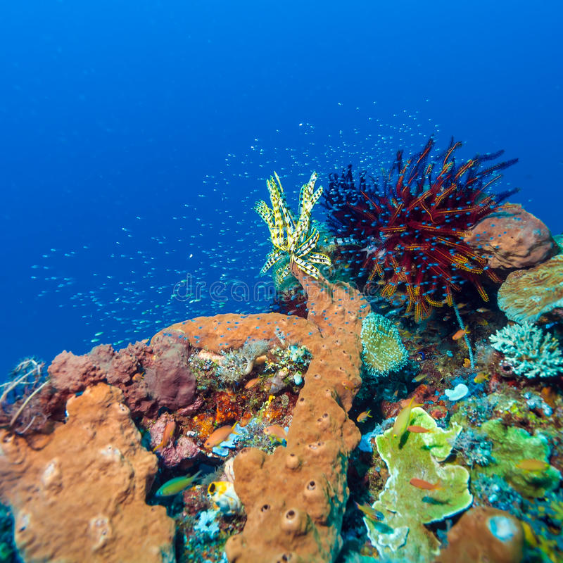 Colorful Tropical Coral Reef with Sea Lilies royalty free stock images