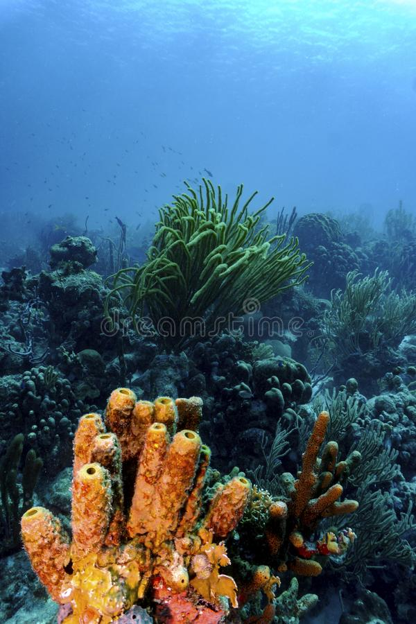 Colorful tropical corals stock photo