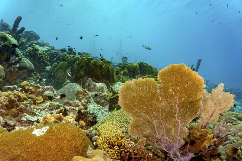Colorful tropical corals stock photography