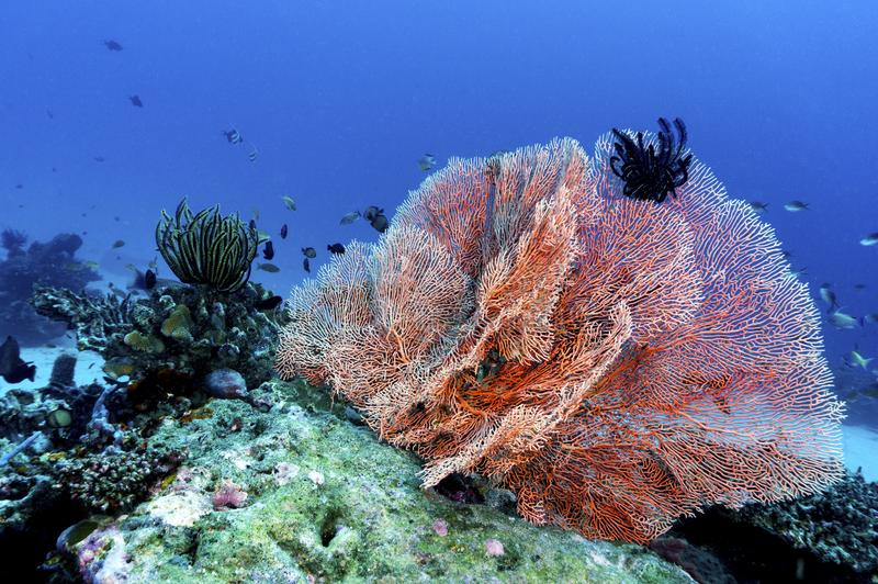 Colorful tropical corals royalty free stock photos