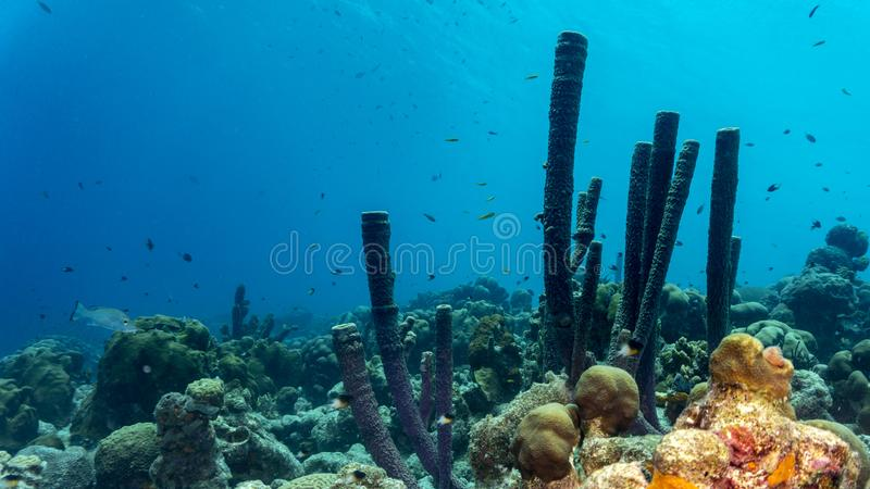 Colorful tropical corals royalty free stock photo