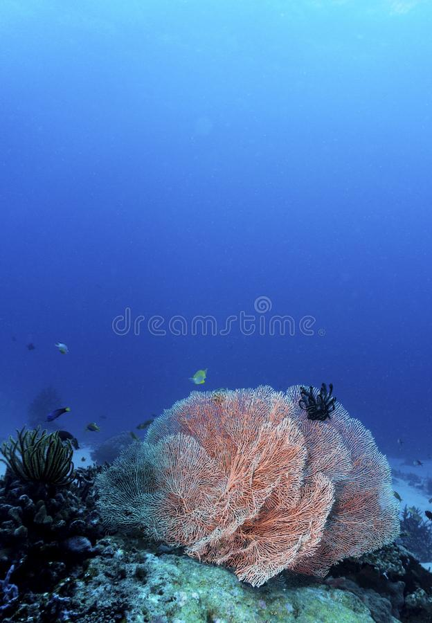Colorful tropical corals stock photos