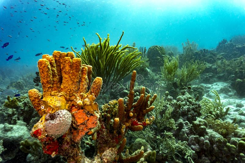 Colorful tropical corals stock images