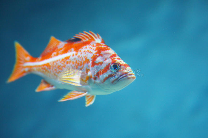 Download Colorful tropical fish stock photo. Image of reef, swim - 23869732