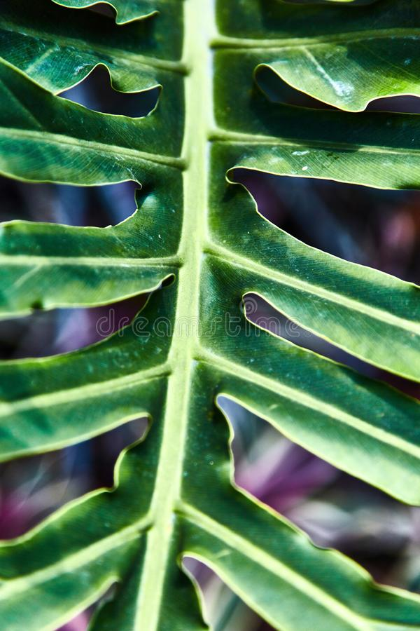 Colorful tropical palm leaves. Close-up royalty free stock photography