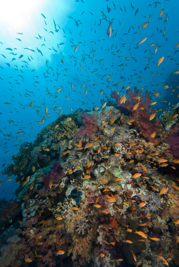 Download Colorful Tropical Reef, Red Sea, Egypt Stock Photo - Image: 11384110