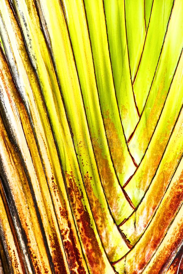 Colorful tropical yellow palm leaves. Close-up stock photography
