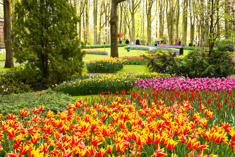 Colorful tulip flowers in spring park. Flower landscape. Narcissus, hyacinths, lily, hydrangeas, muscari outside royalty free stock photos