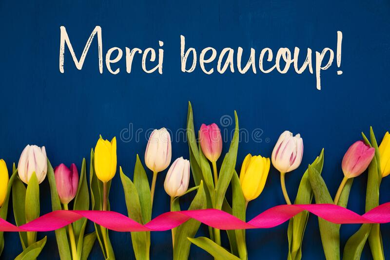 Colorful Tulip, Merci Beaucoup Means Thank You, Ribbon, Blue Background. French Text Merci Beaucoup Means Thank You. White And Pink Tulip Spring Flowers With royalty free stock photos