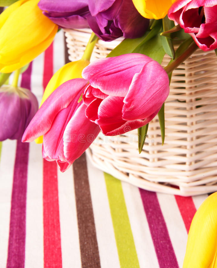 Colorful tulips. Variety of colorful tulips in a basket stock photo
