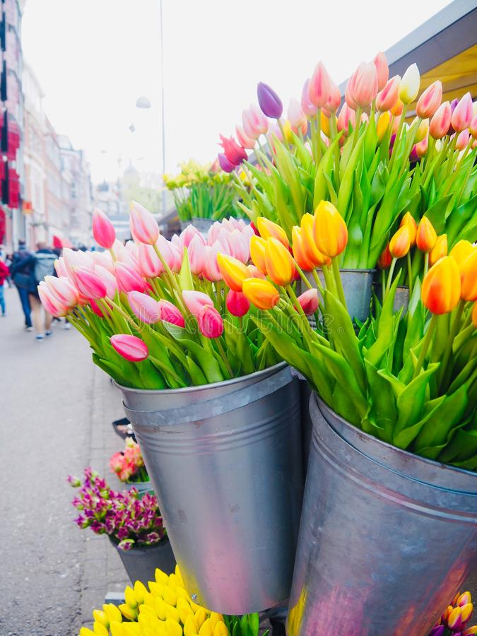 Colorful tulips in the baskets. stock photography