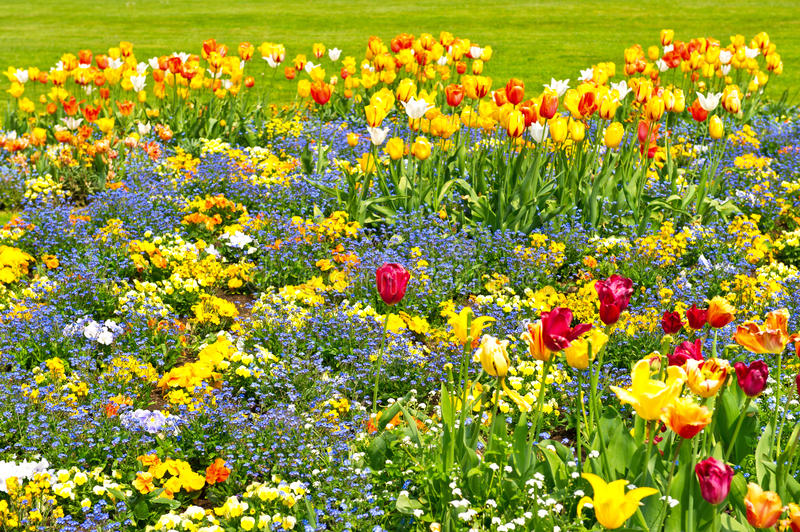 Download Colorful Tulips On Flowerbed. Outdoors Garden Stock Photo - Image: 23216972