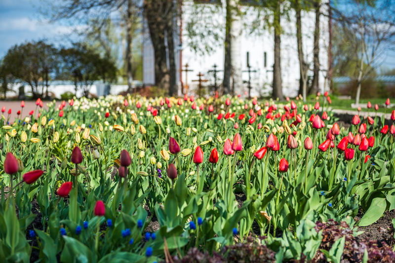 Colorful tulips garden near Saint Nicholas (Nikolsky) monastery stock image