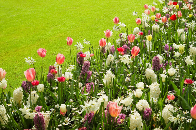 Download Colorful Tulips, Hyacinths And Daffodils In Spring Stock Image - Image: 24645743