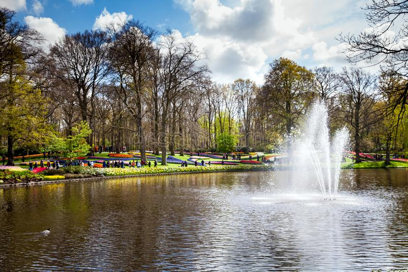 Colorful tulips on the river bank in Keukenhof park in Amsterdam area, Netherlands. Spring blossom in Keukenhof royalty free stock photos