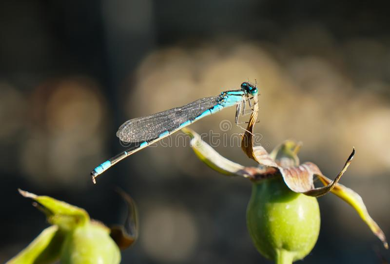 Exotic Flyer in Shades of Turquoise royalty free stock photo