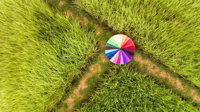Colorful umbrella in the green rice field. royalty free stock photo