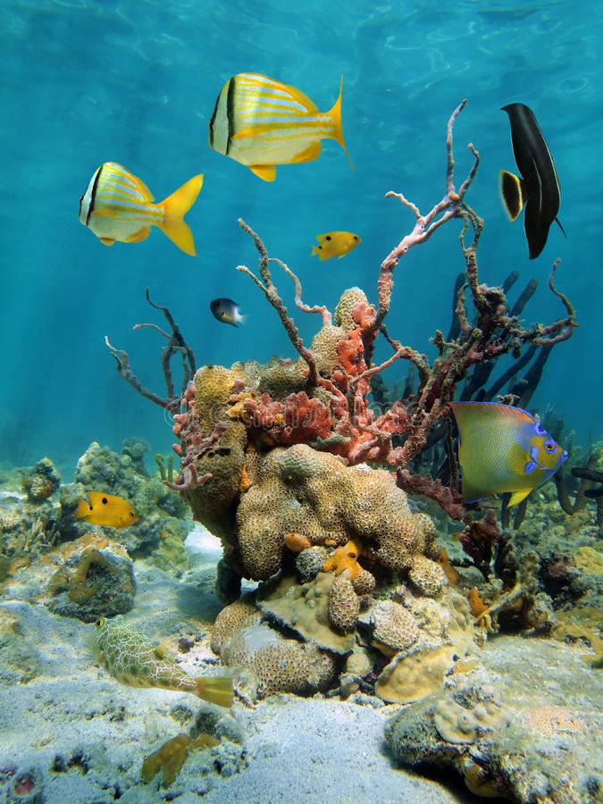 Download Colorful Undersea View With Corals And Sea Sponges Stock Photo - Image: 28127892
