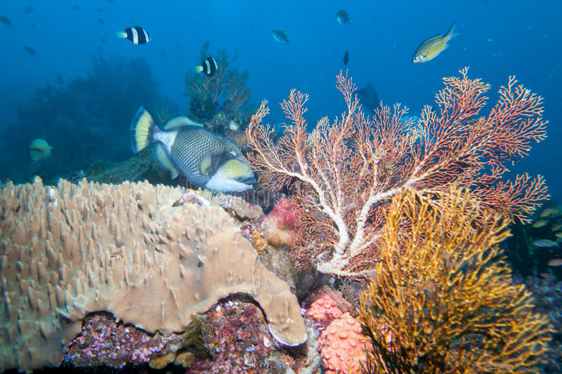 Colorful underwater landscape with corals and fishes royalty free stock images