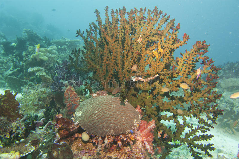 Colorful underwater landscape with corals stock photography