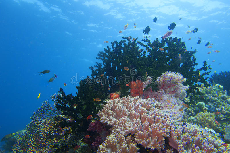 Colorful underwater landscape reef of Raja Ampat Papua stock photography