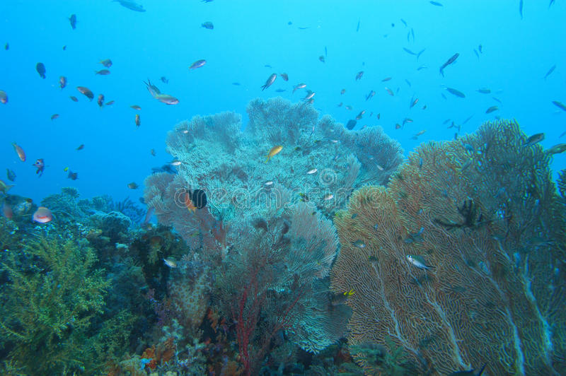 Colorful underwater landscape reef of Raja Ampat Papua royalty free stock photo