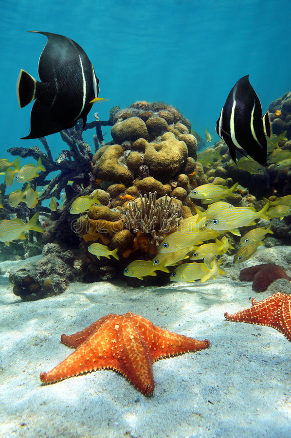Colorful underwater marine life in a reef stock photos