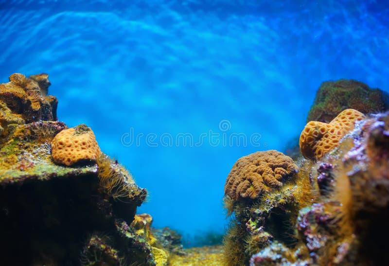 Colorful underwater world stock photos