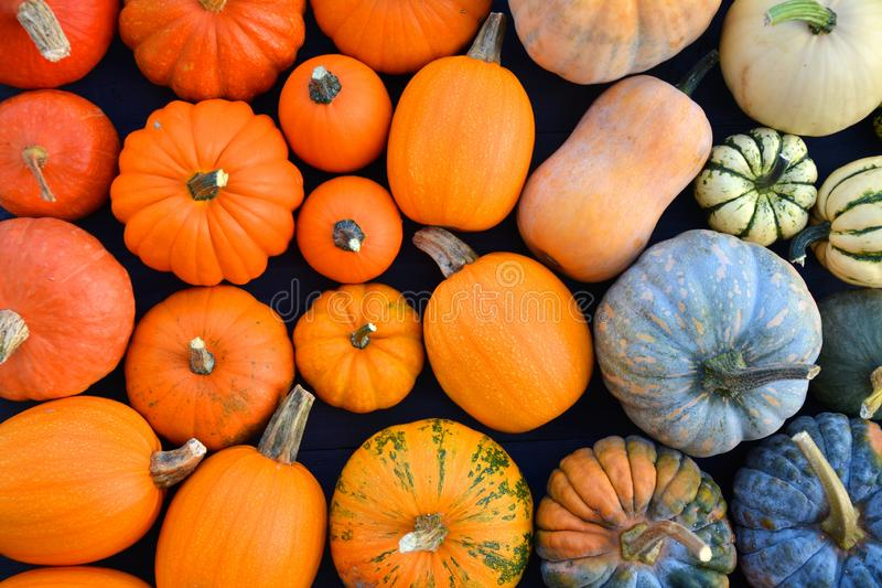 Colorful varieties of pumpkins and winter squashes royalty free stock image
