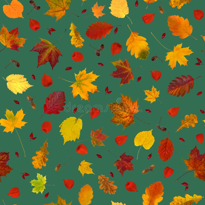 Colorful various fall leaves, physalis lanterns, dog-rose fruits and acorns collage seamless pattern stock image