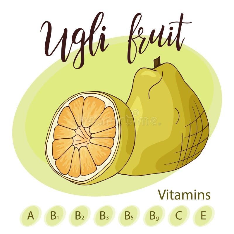 Colorful vector illustration. Food design with fruit. Hand drawn sketch of ugli fruit. Organic fresh product for card or. Poster design for cafe, market vector illustration