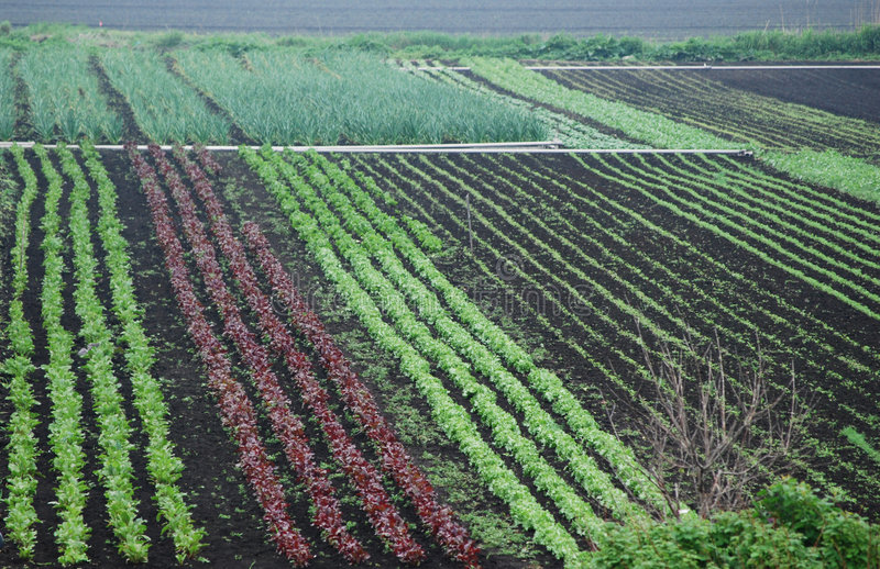 Colorful vegetable rows stock photo