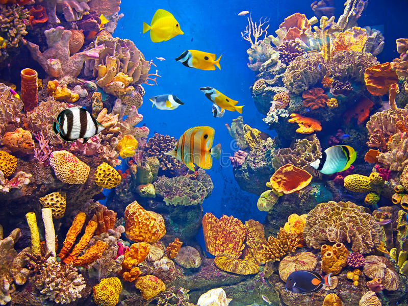 Colorful and vibrant aquarium life stock photography