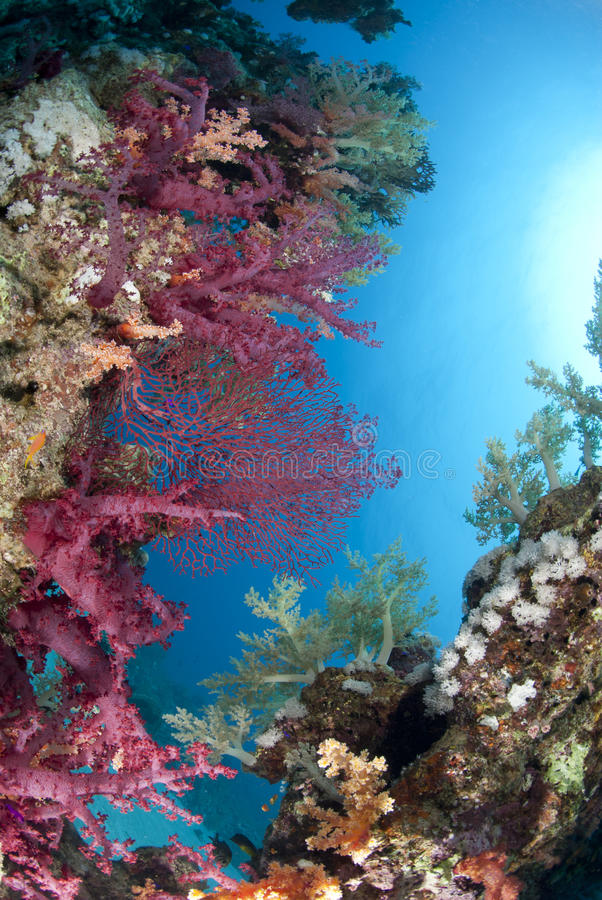 Colorful and vibrant tropical reef scene. stock photos