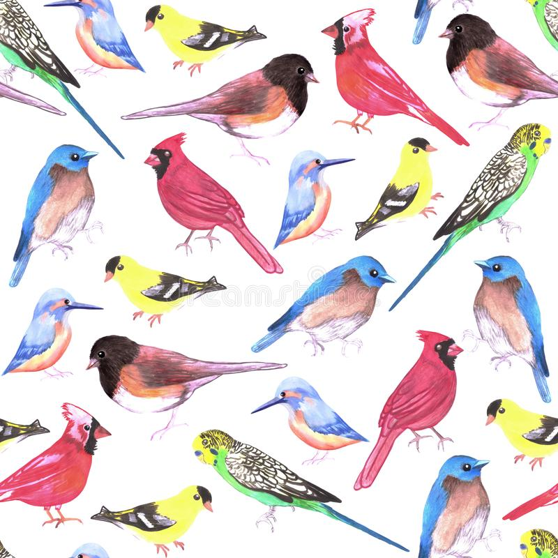 Colorful watercolor birds seamless background in tetra color scheme.  royalty free illustration