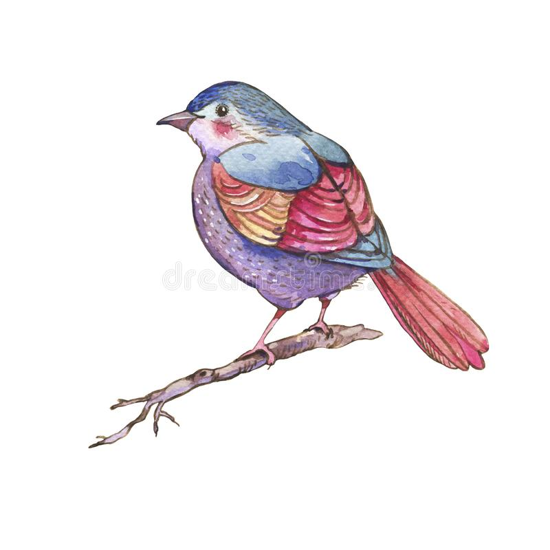 Colorful watercolors birds isolated on white background royalty free illustration