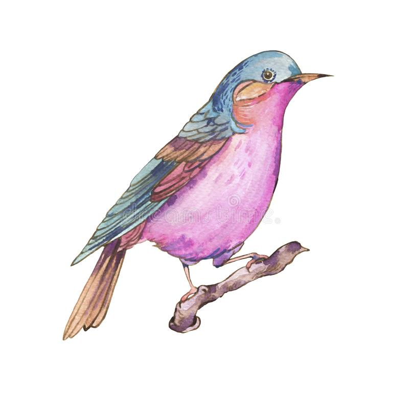 Colorful watercolors birds isolated on white background vector illustration