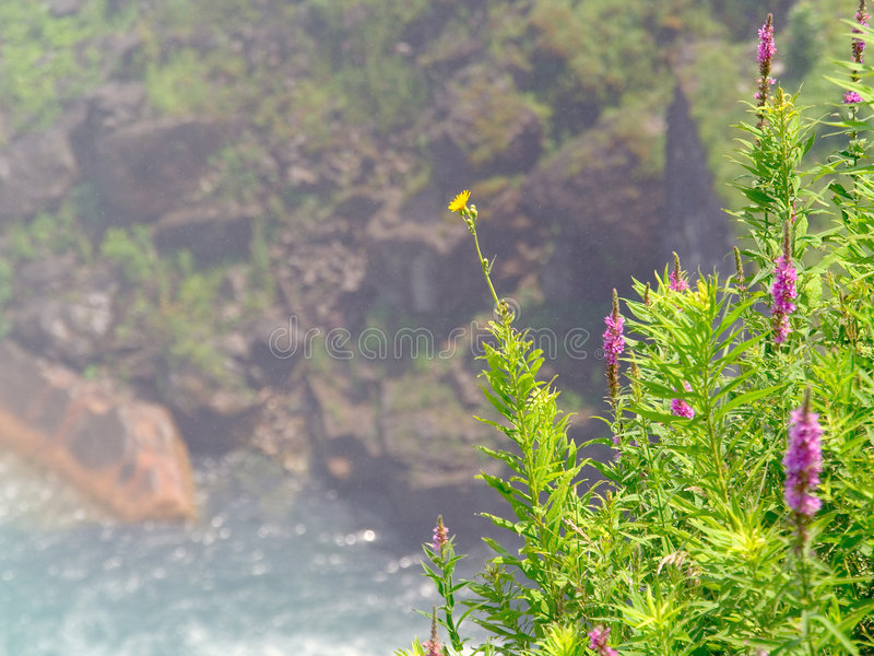Download Colorful Weeds In Foreground Set Against Scenic Background Royalty Free Stock Photo - Image: 185535