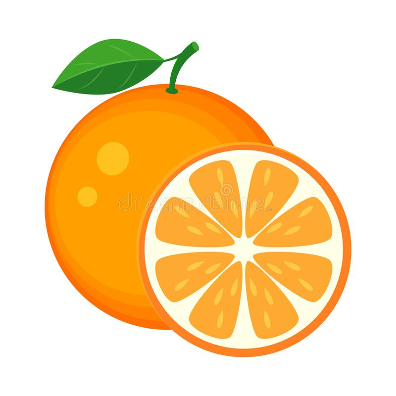Colorful whole and slice orange with green leaf. Vector illustration isolated on white background. royalty free illustration