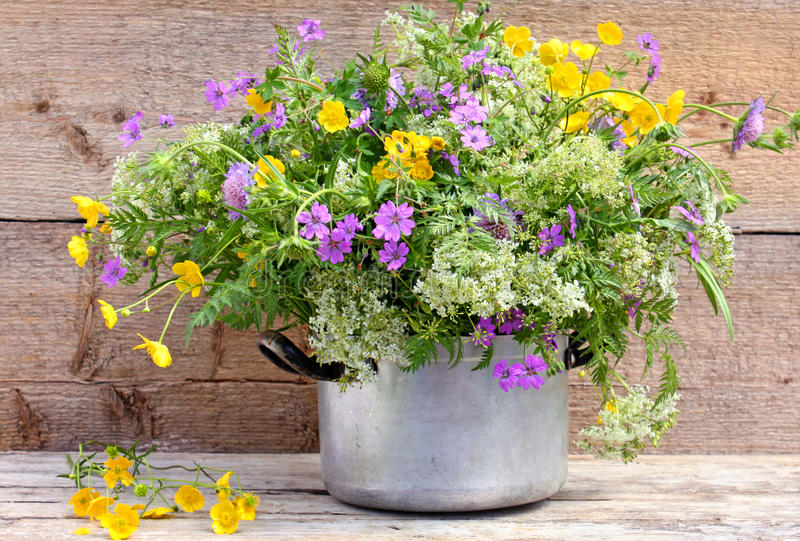 Colorful wild flowers in pot. Colorful wild flowers blooming in old metal pot with rustic wooden background royalty free stock photo