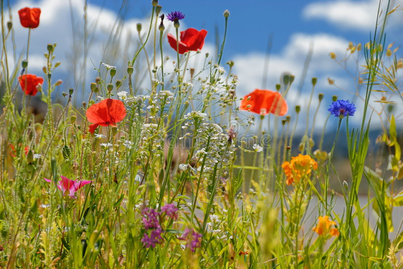 Colorful wildflowers stock photography