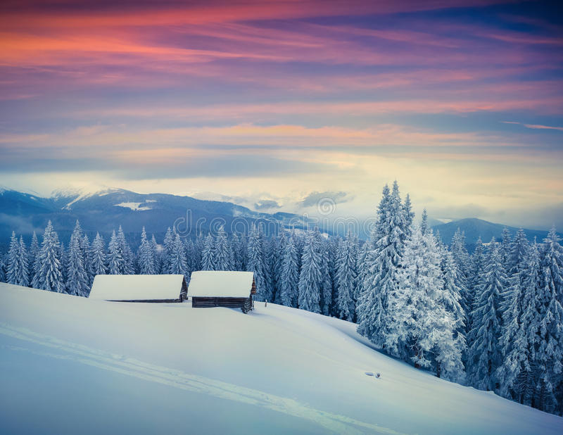 Colorful winter morning in Carpathian mountains. royalty free stock images