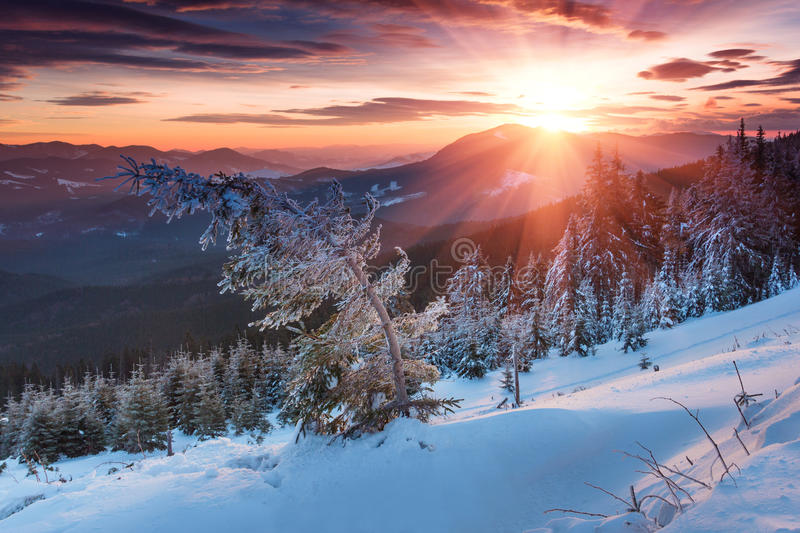 Colorful Winter Morning In The Mountains Dramatic
