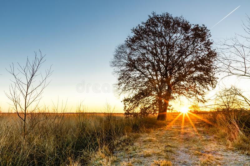 Colorful winter sunrise on a field with tree in recker moor royalty free stock photo